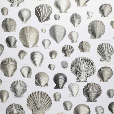 Papier peint Captain Thomas Browns Shells Pearl, John Dorian